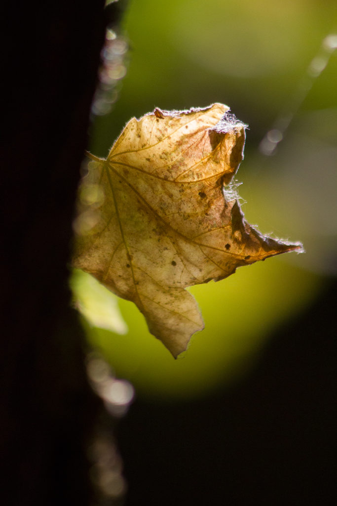 macro image of fall leaf framed in beautiful soft focus background