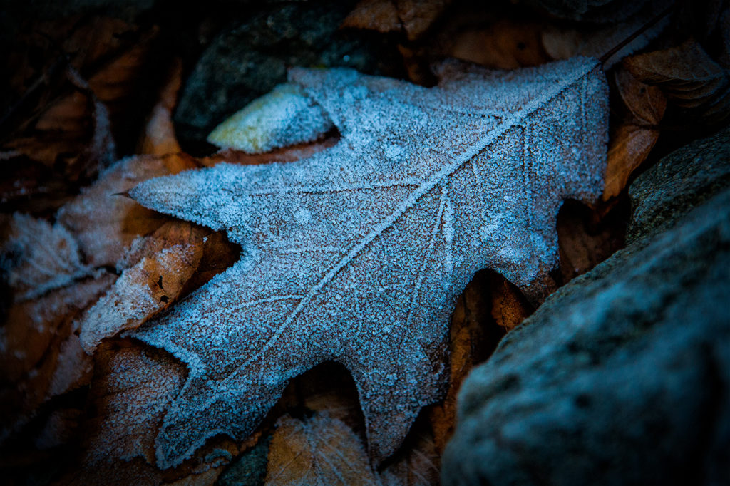 frozen leaf in the southern Appalachia mountains