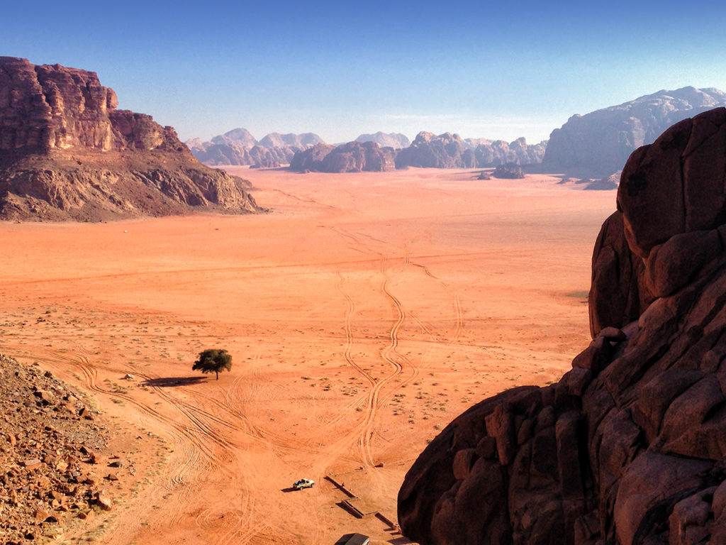 A lone tree in vast desert landscape of Wadi Rum in Jordan