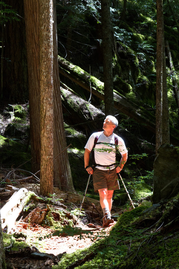 Hiker in a pool of light looks up into forest canopy of western Canadian rainforest
