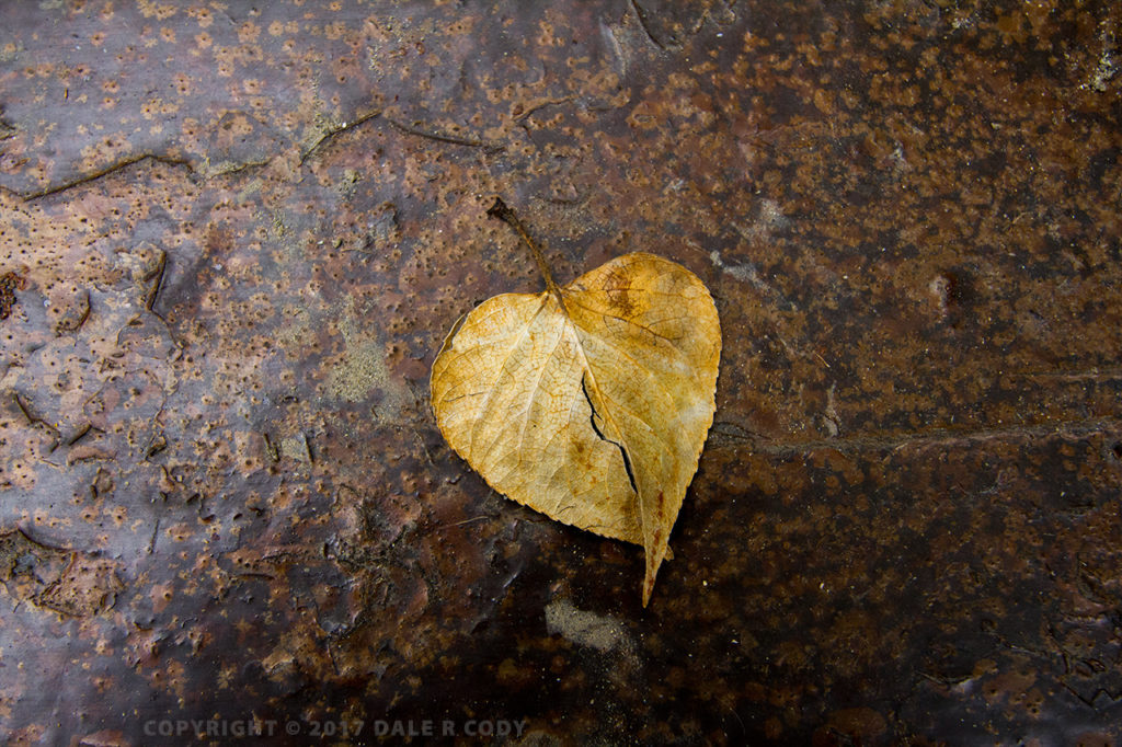 leaf shaped like a heart