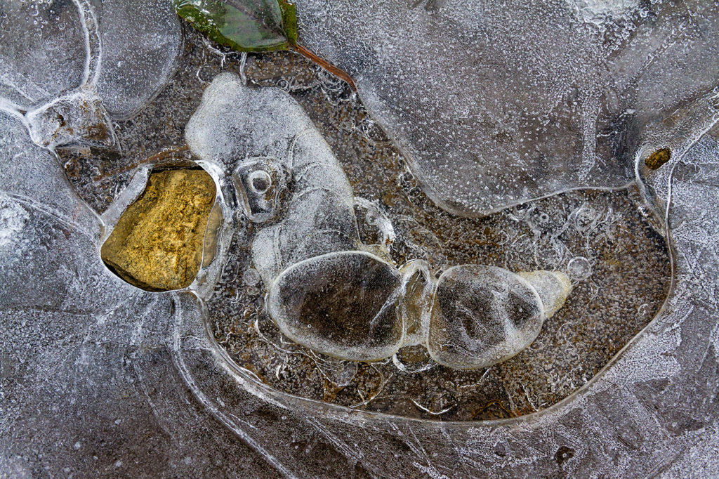beautiful patterns and textures in a frozen puddle