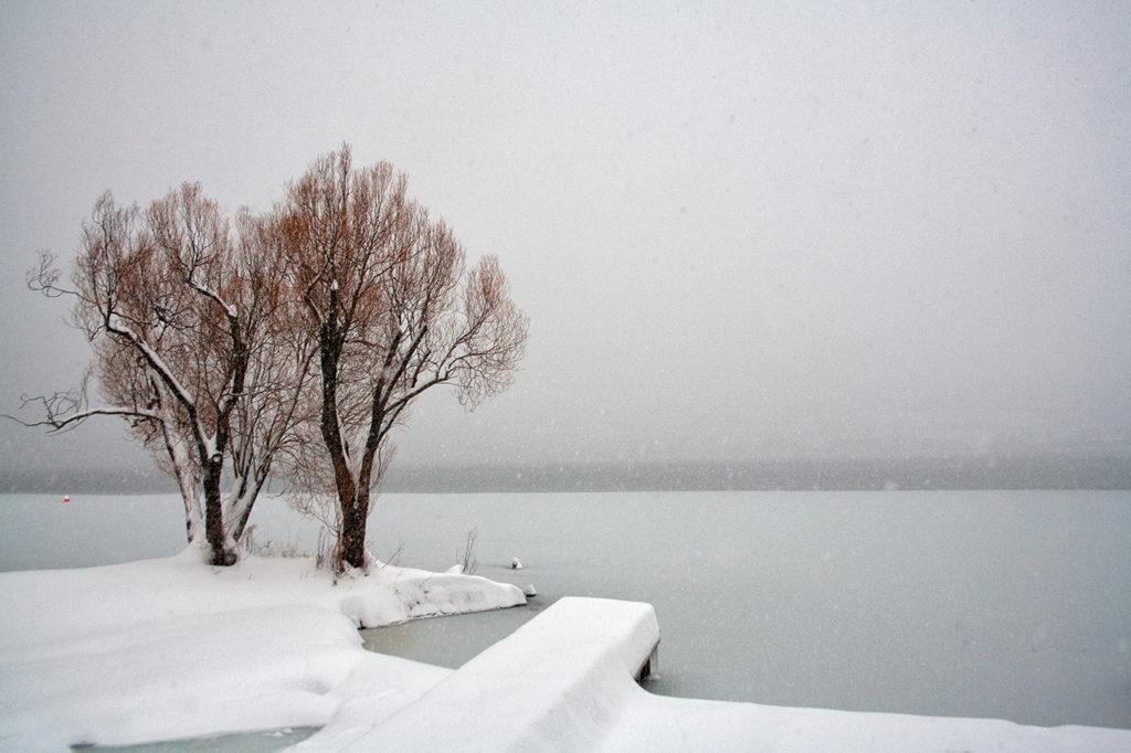 2 trees beside a frozen winter lake in western Canada